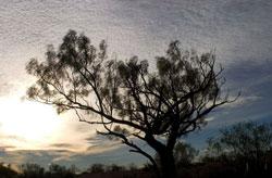 sidebar-mesquite